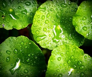 beautiful, rain, and green image