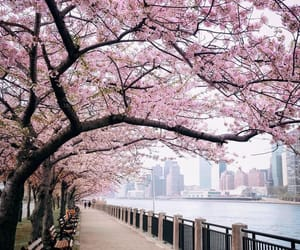 cherry blossoms, cityscape, and dreams image