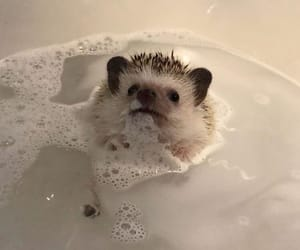 animals, aesthetic, and hedgehog image