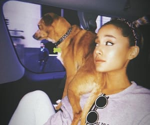 dogs, Toulouse, and ariana grande photoshoot image