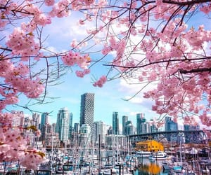 canada, pink, and places image
