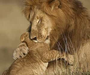 animals, lion, and puppies image