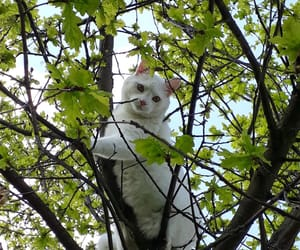 cat, spring, and tree image