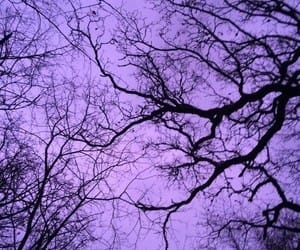 purple, tree, and aesthetic image