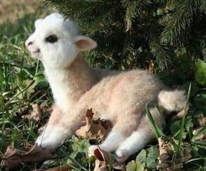 baby alpaca image