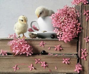 beautiful, shabby chic, and book image