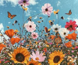 butterfly, field, and nature image
