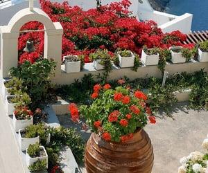 flowers, house, and santorini image