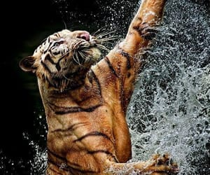 animals, Powerful, and tiger image