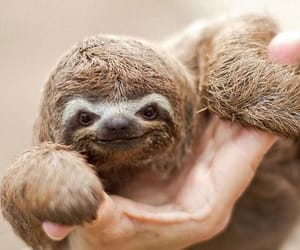 animals, wild, and sloth image