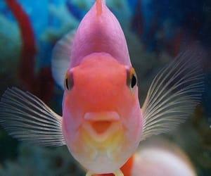fish and animal image