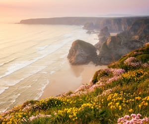 flowers, cliff, and sea image