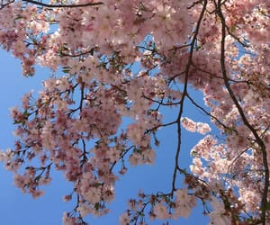 aesthetic, blossom, and blue image