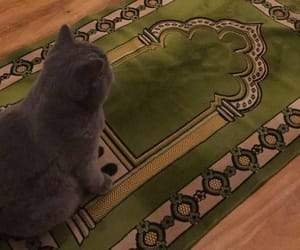 cats, funny, and islam image