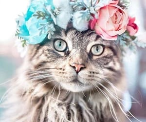 cat, animals, and flower image
