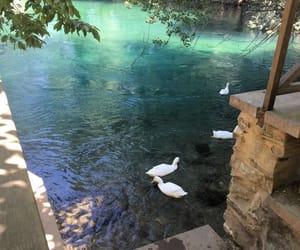 aesthetic, beauty, and lake image