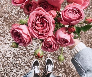 bloom, flowers, and pink image