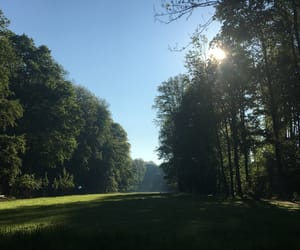 beautiful, morning, and nature image