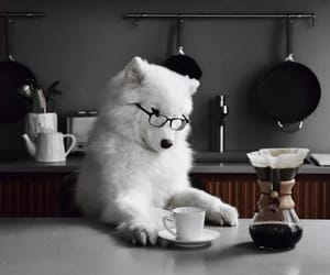 dog, animals, and baby image