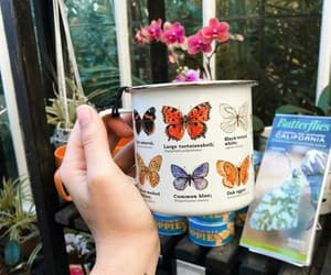 butterfly, flowers, and greenhouse image