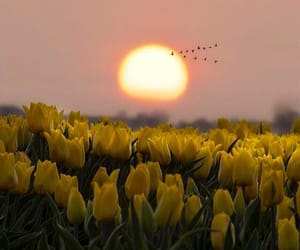 birds, dreamy, and yellow tulips image