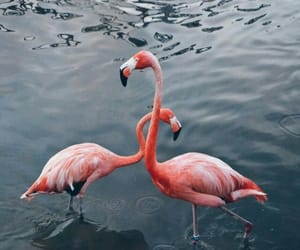 flamingo and beautiful image