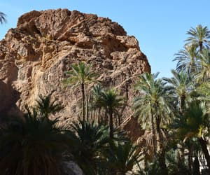adventures, oasis, and palms image