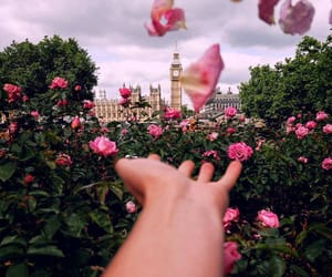 flowers, pink, and london image