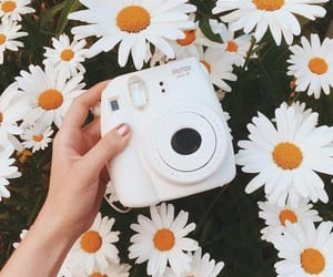 flowers, polaroid, and white image