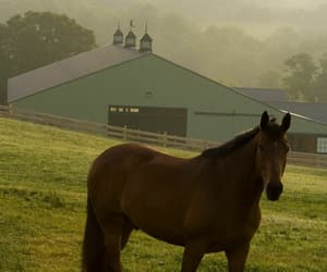 animals, stables, and barn image