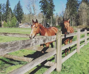 barn, equestrian, and horses image