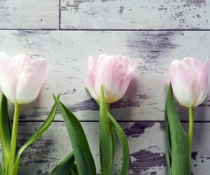 blooms, pink flowers, and seasons image