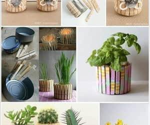 cactus, diy, and plantas image