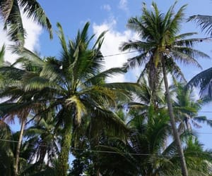 coco, coconut, and Philippines image