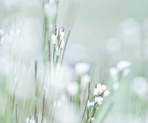 mint, nature, and pastel image