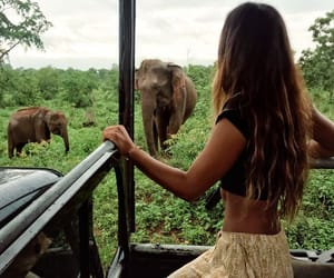 elephant, nature, and adventure image