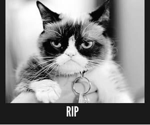 black & white, internet meme, and kitty image
