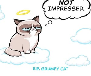 angel, gone too soon, and grumpy cat image