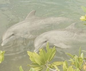 aesthetic, dolphins, and nature image