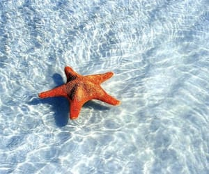 summer, sea, and stars image