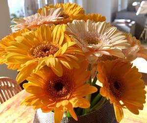 blume, blumen, and flower image