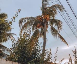 beach, nature, and coqueiros image