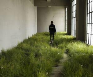 california, design, and grass image