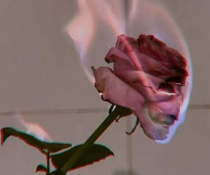90's, rose, and blue image