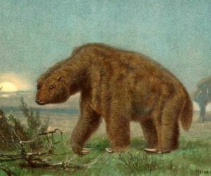ground sloth image