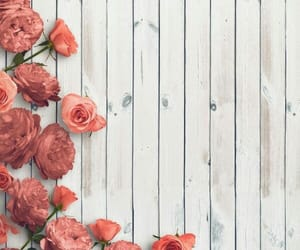 flowers, roses, and nature image