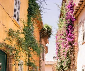 flowers, france, and photography image