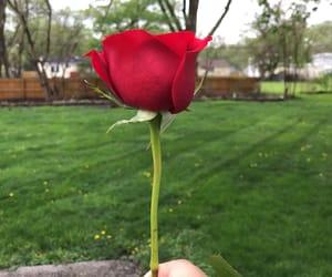green, natural, and rosa image