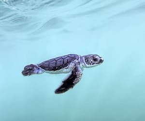 ocean, turtle, and animals image