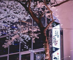 blossom, street, and japan image